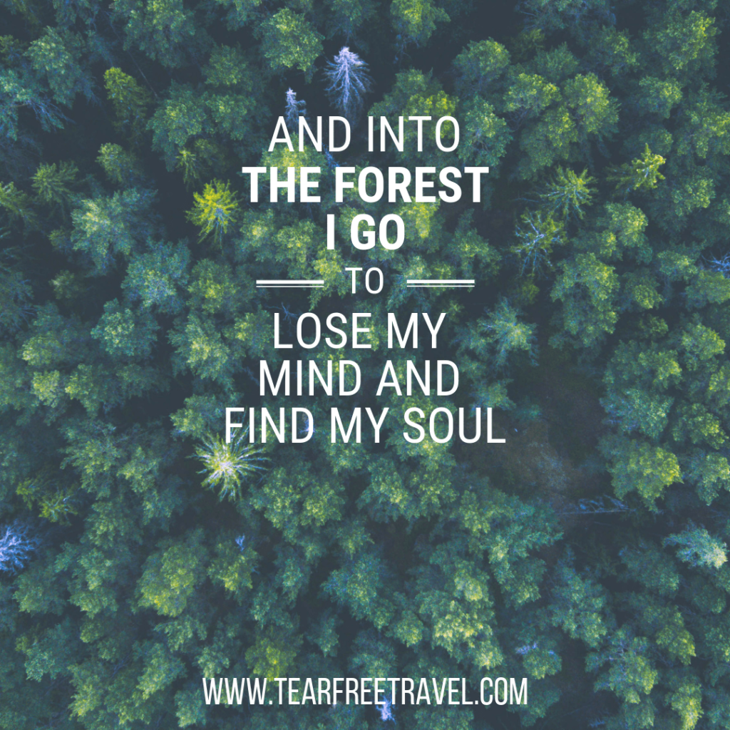 And into the forest I go to lose my mind and find my soul | Adventure Quotations 1